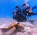 宮古島ウミガメ体験ダイビングフォトツアー